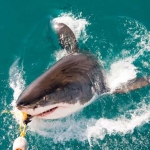 shark-diving-01