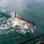 shark-diving-02
