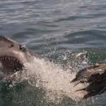 shark-diving-03