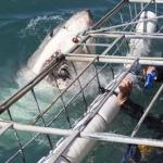 shark-diving-06