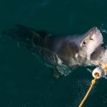 shark-diving-07
