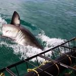 shark-diving-08