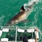 shark-diving-09