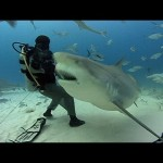 An up close encounter with Bull Sharks…