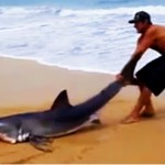 Brave man saves Great White Shark