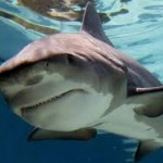 Shark Facts: Things you didn't know about sharks