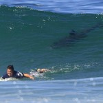 5 Reasons Why You Should Not Be Afraid of Sharks When Learning to Surf